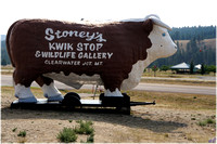 Cow #2, Clearwater, Mt